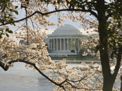 Thomas Jefferson Memorial Surrounded by Cherry Blossoms